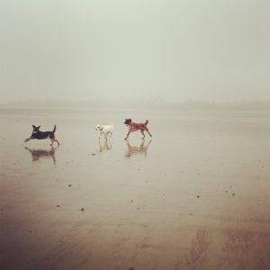 Drei-Hunde-Spaziergang2