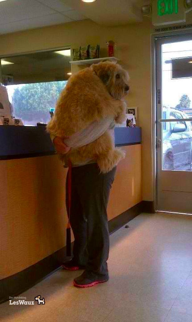 Angst Tierarzt 3