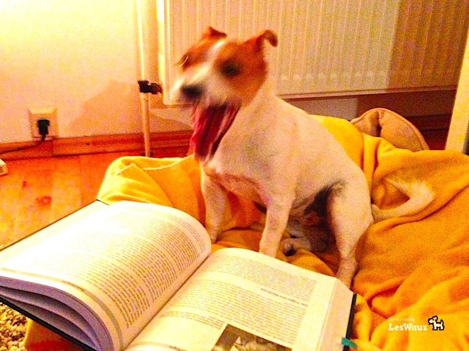 Pixie lesen gähn