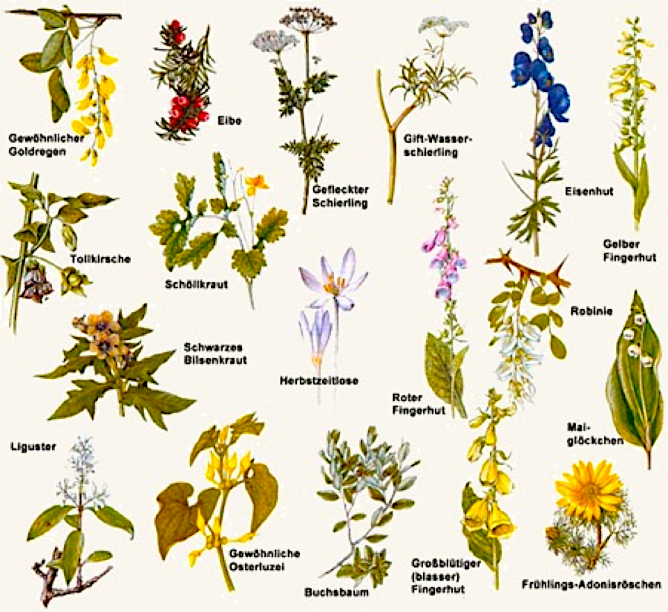 Giftige pflanzen für hunde