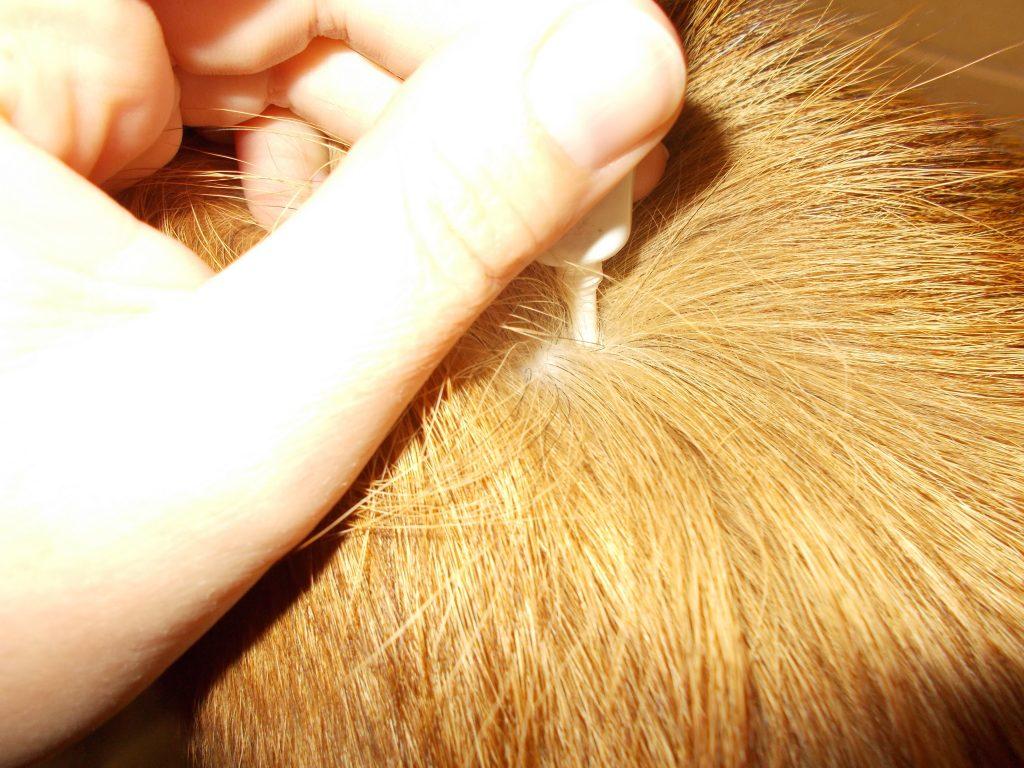 Wie Schädlich Sind Nervengifte Im Hunde Floh- Und