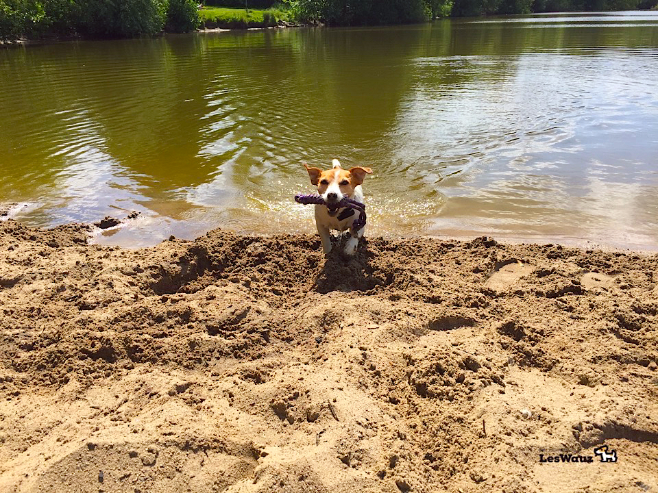 Schwimmspielzeuge für hunde im terrier testlabor leswauz