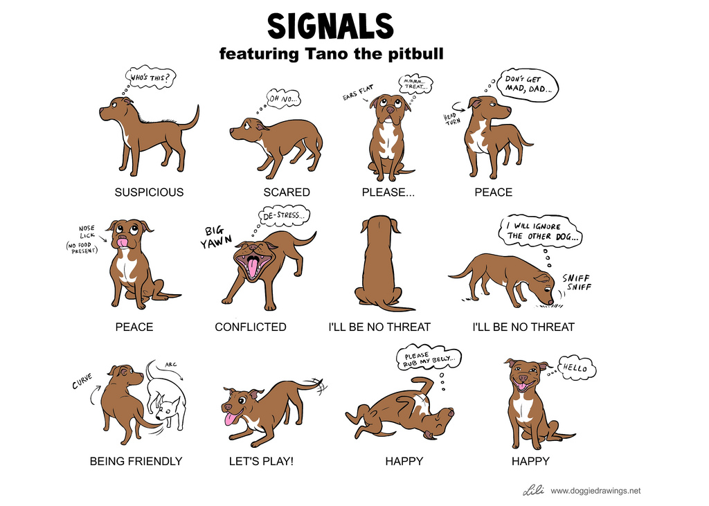 Gestures and Postures in Social Signal Processing *