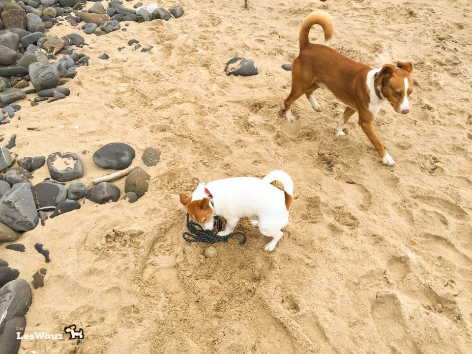 Hund-Pixie-am-Strand-Port