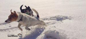 Zwei-Terrier-Schnee