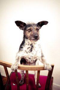 Hunde DNA Test2