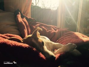 Terrier-entspannt