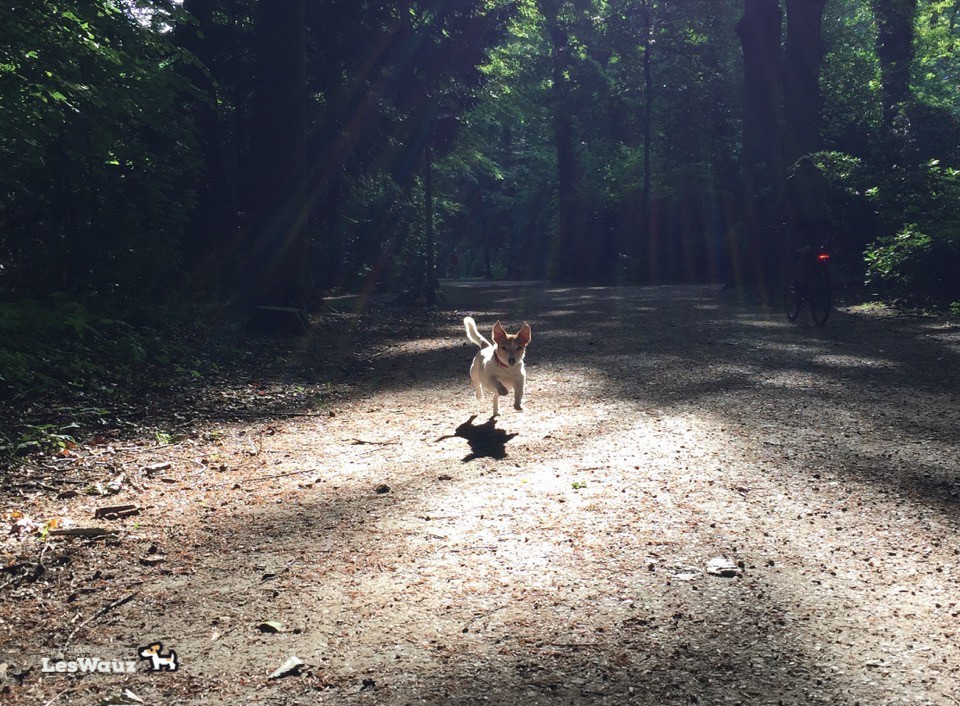 Hund-Spaziergang-fly
