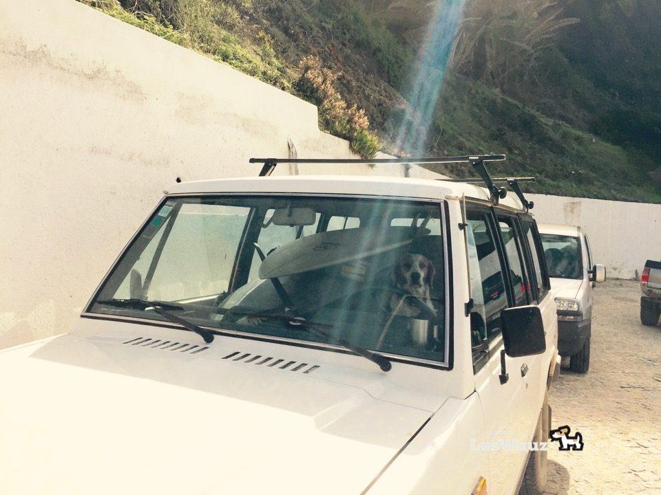 Hund-wartend-im-Auto-Port