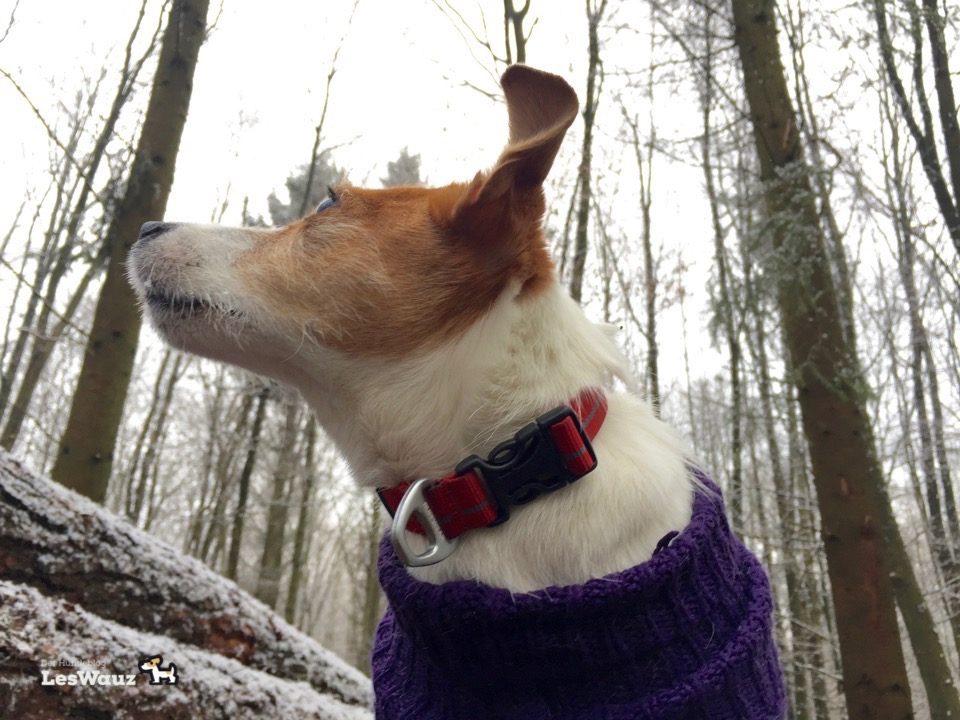 Hund-Spaziergang-Schnee3