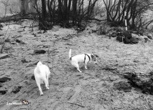 Hund-Spaziergang-Elbe11