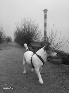 Hund-Spaziergang-Elbe4