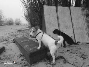 Hund-Spaziergang-Elbe3