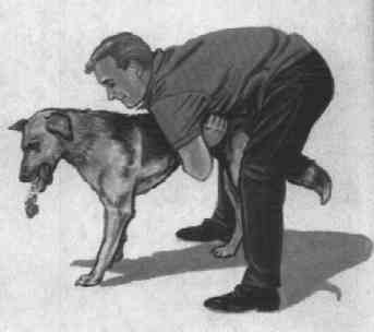 How To Give A Dog Heimlich Maneuver