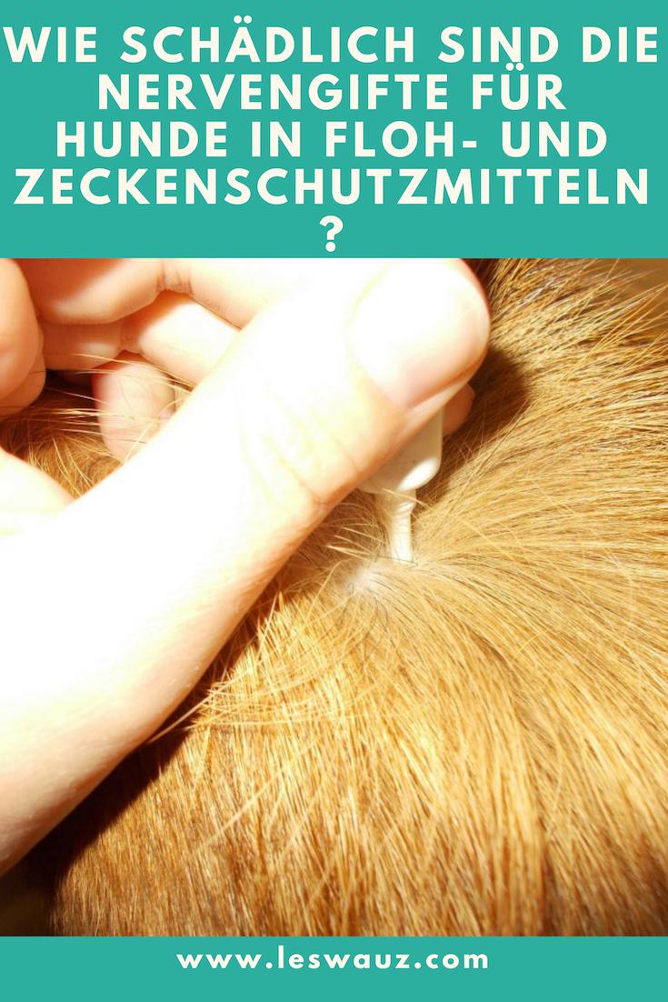 Hundeflöhe für menschen gefährlich