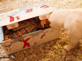 Weihnachtswichtel9