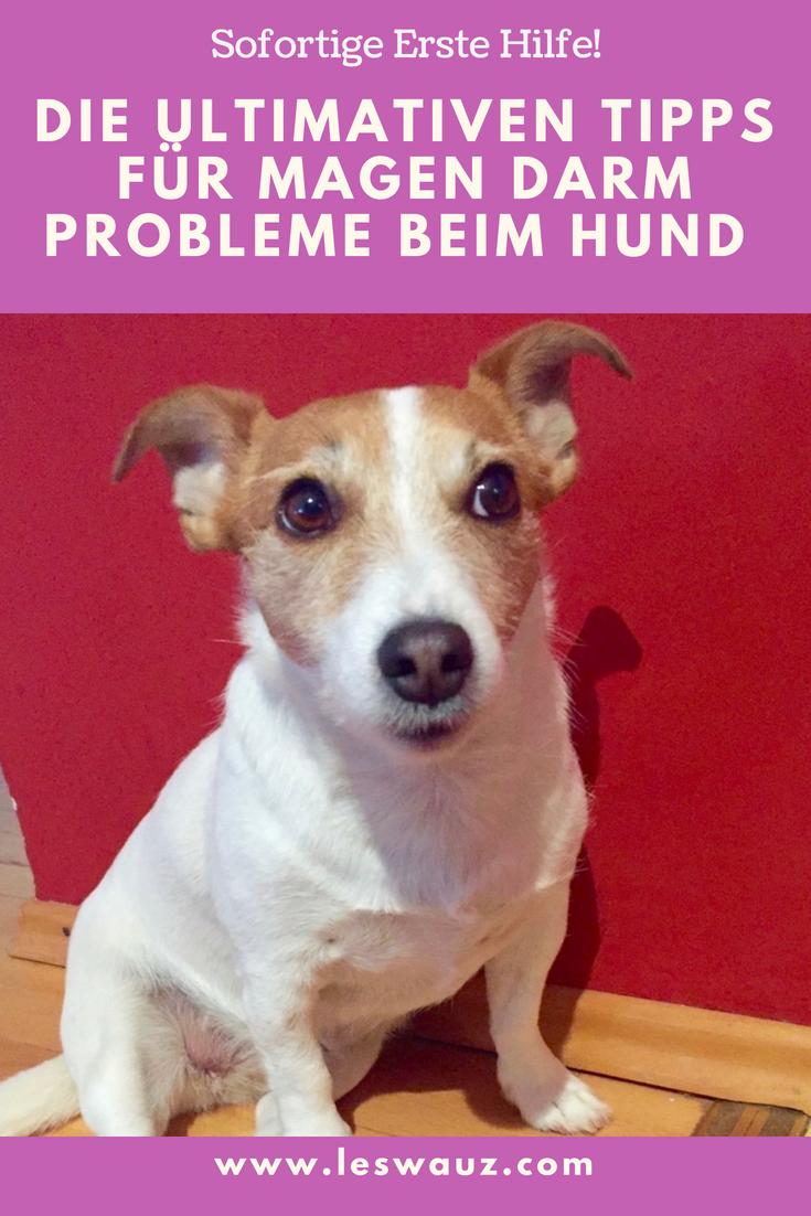 Die Ultimativen Tipps Für Magen Darm Probleme Beim Hund Leswauz