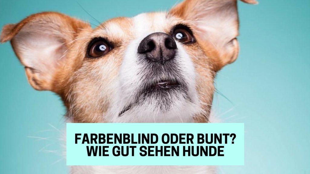 Die Welt Der Hunde Farbenblind Oder Bunt Wie Gut Sehen Hunde